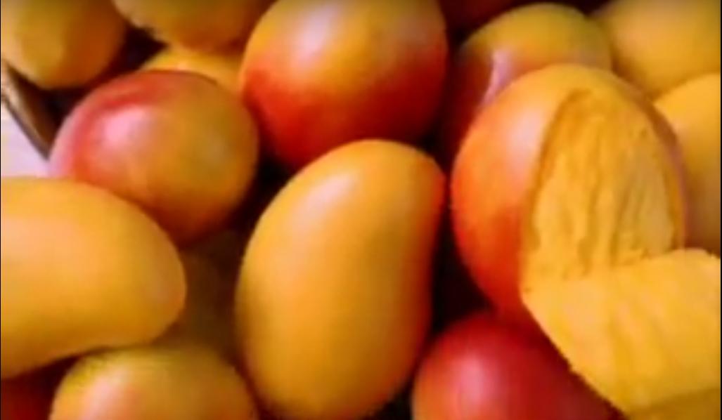 Mango de exportación